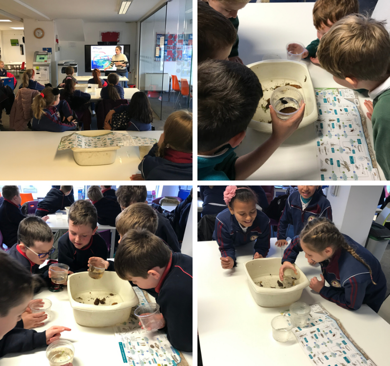 Celebrating Science Week 2019!